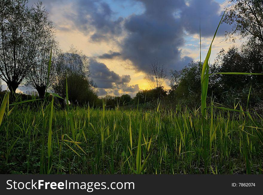 Backlit Grass during Sunset