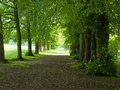 Free An Avenue Of Trees Leading Into The Light Stock Image - 7870321