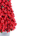 Free Red Berry Tree Stock Images - 7872244