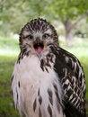 Free Hawk Portrait Royalty Free Stock Image - 7874176