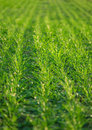 Free Grass Royalty Free Stock Photography - 7879047