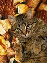 Free Lying Cat. Kitten. Stock Photo - 7879440