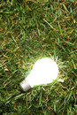 Free Green Light Bulb Royalty Free Stock Photos - 7879568
