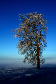 Free Lonely Tree Against The Dark-blue Sky Royalty Free Stock Image - 7873356