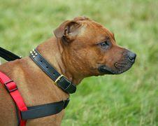 Free Pet Dog Animal Stock Photos - 7873773