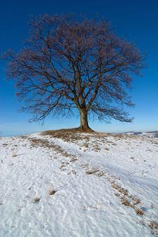 Free Lone Tree Stock Photos - 7876743