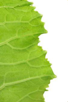 Free Green Leaf Stock Photo - 7877610