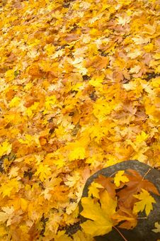 Free Autumn Ground Cover Royalty Free Stock Photography - 7877757