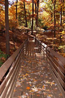 Free Fall Bridge Royalty Free Stock Photos - 7877858