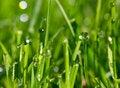 Free Morning Dew Drops Royalty Free Stock Photo - 7881535