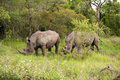 Free Rhino In Kruger Park Stock Images - 7881864