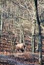 Free Buffalo Stock Photo - 7889220