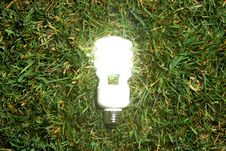 Free Green Light Bulb Royalty Free Stock Images - 7880859