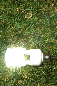 Free Green Light Bulb Royalty Free Stock Photos - 7880938