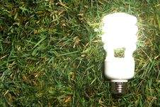 Free Green Light Bulb Royalty Free Stock Photography - 7880957