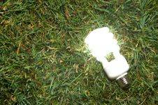 Free Green Light Bulb Royalty Free Stock Image - 7880976