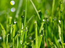 Free Morning Dew Drops Royalty Free Stock Photo - 7881535