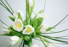 Free White Tulips Bunch Stock Image - 7882441
