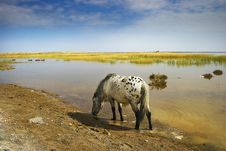 Free Drink An Aqueous Horse In The By The Lake Royalty Free Stock Photography - 7883757