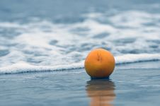 Free Orange On An Ocean Coast Stock Photo - 7884410