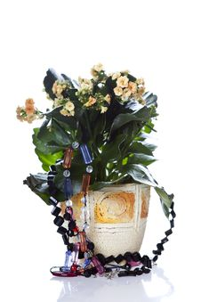 Free Flower Pot Royalty Free Stock Photo - 7886315