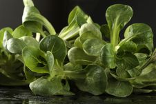 Free Close-up Of Corn Salad (lettuce) Royalty Free Stock Photography - 7887587