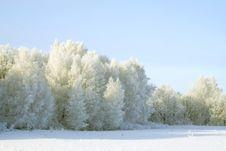 Free Winter Landscape Royalty Free Stock Photos - 7888478