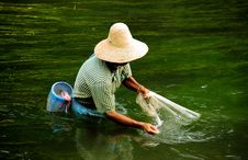 Free Chinese Fisherman With Net Royalty Free Stock Photo - 7888555