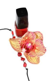 Free Cosmetics Royalty Free Stock Photos - 7888568