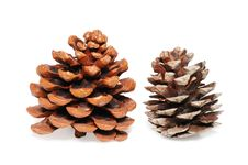 Free Cones Of A Cedar Royalty Free Stock Images - 7888629