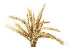 Free Wheat Ears Stock Photos - 7888903