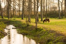 Pony Grazing In Rural Setting Stock Photos