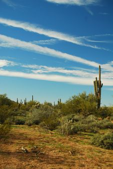 Free Saguaro Cactus Stock Photos - 7889473
