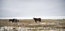 Free Horses Stock Photo - 7889660
