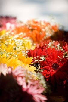 Free Bouqet Of Flowers Stock Photo - 7891250