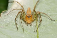 Free Orange Lynx Spider Stock Image - 7891351