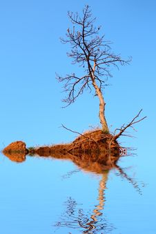 Dry Tree Flooding In Water Stock Image
