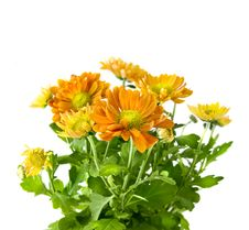 Free Yellow Chrysanthemum Bouquet Isolated On White Royalty Free Stock Image - 7892736