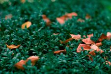 Free Leaves Stock Image - 7893291