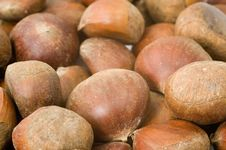 Free Chestnuts Stock Photo - 7894040