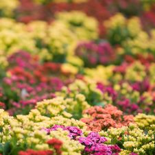 Free Field Of Flowers Stock Photography - 7894692