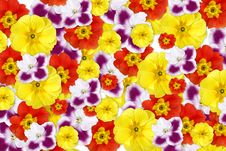 Free Color Flowers Background Stock Photos - 7895273