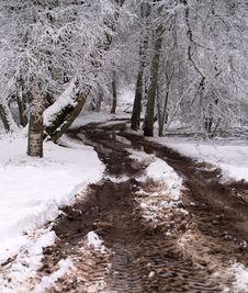 Free Winter Road Royalty Free Stock Photo - 7895365