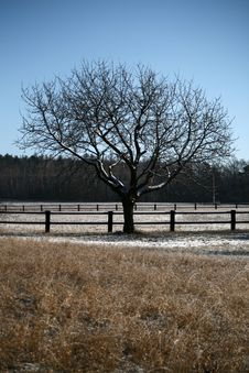 Free Single Winter Tree Stock Images - 7895964