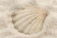 Free Seashell On The White Sand Royalty Free Stock Photo - 7896025