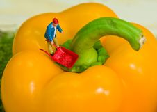 Free Workman On Yellow Pepper Stock Photos - 7896363