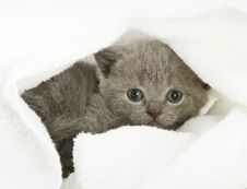 Free Kitten Over White Stock Photography - 7897132