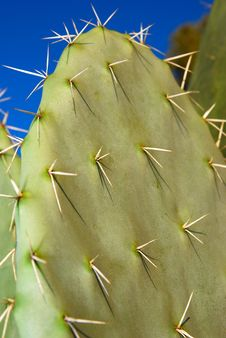 Free Cactus Royalty Free Stock Photo - 7897365