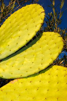 Free Cactus Stock Photo - 7897380