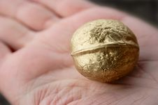 Golden Walnut On Hand Royalty Free Stock Photo